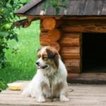 Домик для маленькой собачки - фото